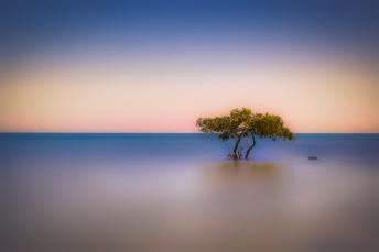 delpliar tree colored